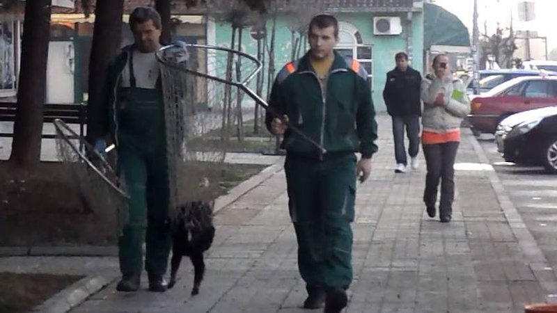 Goran dogcatcher petition